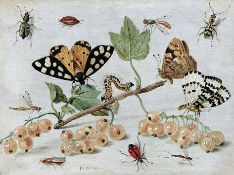 Insects and Fruit Poster by Jan van Kessel - AllPosters.co.uk