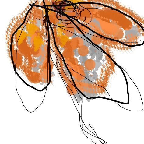 Orange Petals Art Print