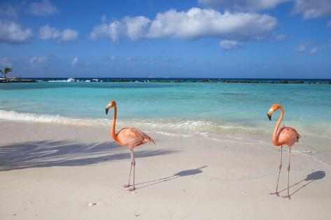 Flamingos On Flamingo Beach Renaissance Island Oranjestad Aruba Lesser Antilles Photographic Print By Jane Sweeney At Allposters
