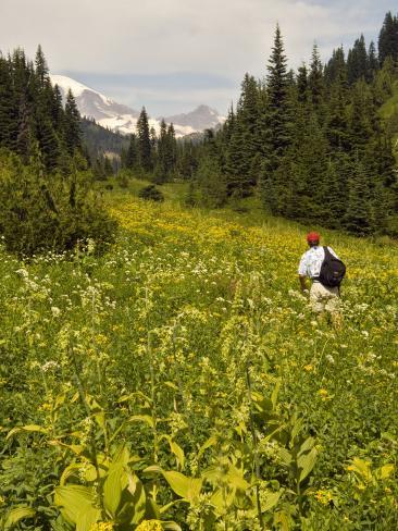 Hiker and Wildflowers in the Tatoosh Wilderness, Cascade Range of Washington, USA Photographic Print