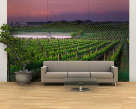 Sunrise in Distant Fog, Carnaros, Napa Valley, California, USA Wall Mural – Large