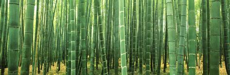 Japan (Bamboo Forest) Poster