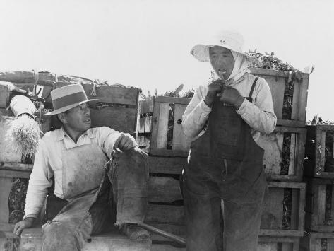 Japanese-Americans Farm Workers in California. Photo by Dorothea Lange, 1937 Stretched Canvas Print