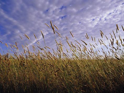A Grassland Scene in Victoria Photographic Print