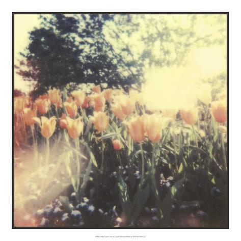 Tulipa Exposta II Giclee Print