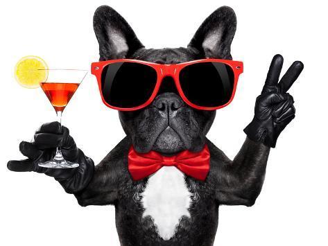 Cocktail Party Dog Valokuvavedos