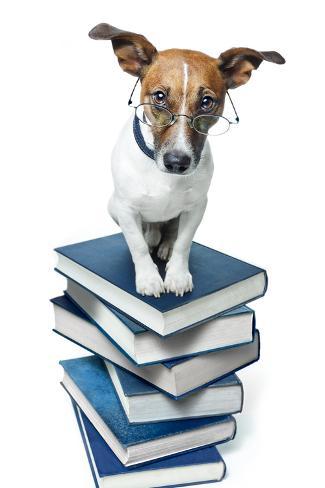 Dog Book Stack Valokuvavedos