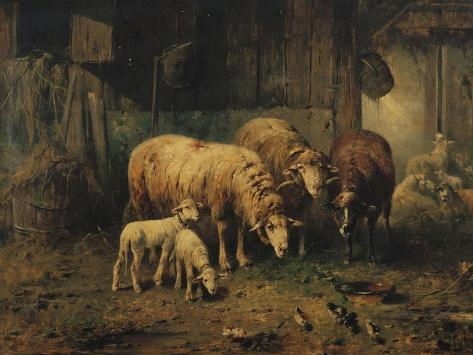 Sheep in a Barn Giclee Print