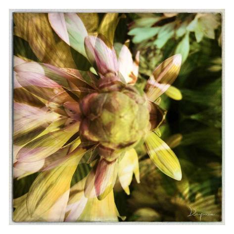 Delicate petals I Taidevedos