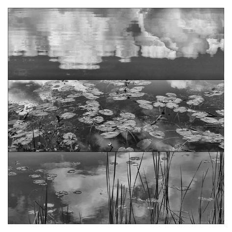 Pond-Land 3 Art Print