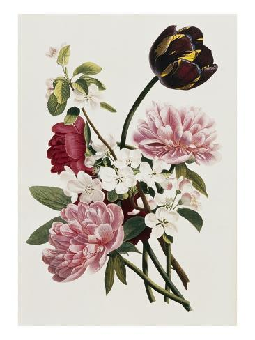 A Bouquet of Tulip and Peonies Giclee Print