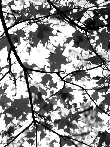 Underneath II Valokuvavedos