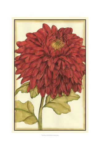 Ruby Blooms I Art Print