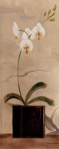 Asian Orchid II Art Print