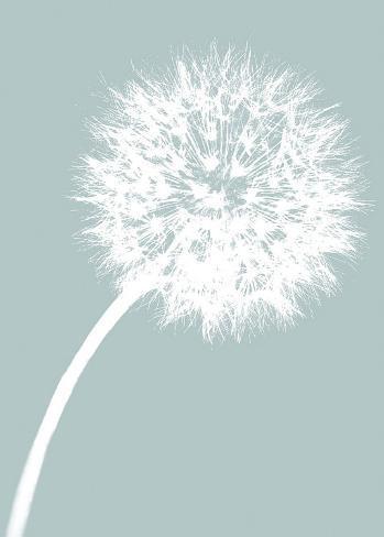 Dandelion Tilt (blue) Stretched Canvas Print