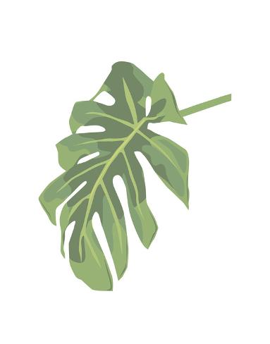 Philodendron 3 Art Print