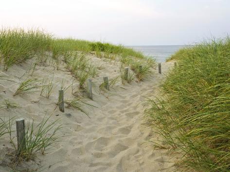 Trilha para Meadow Beach, Cape Cod National Seashore, Massachusetts, EUA Impressão fotográfica premium