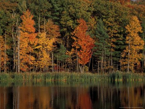 Wetlands in Fall, Peverly Pond, New Hampshire, USA Photographic Print