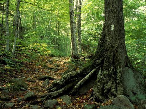 White Blaze Marks Appalachian Trail, White Mountains, New Hampshire, USA Impressão fotográfica