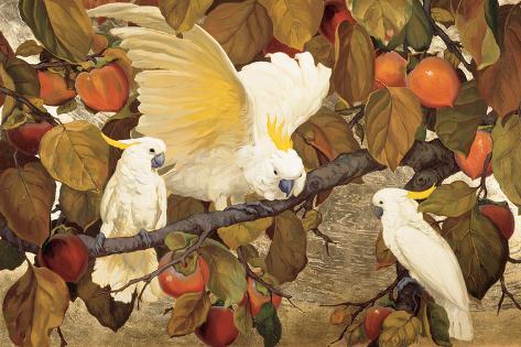 Persimmons and Cockatoos Lámina