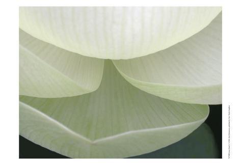 Lotus Detail V Art Print