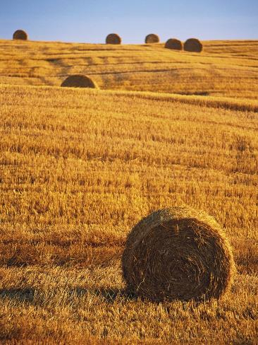 Harvested Fields of Hay Photographic Print