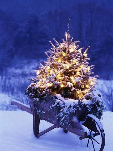 Lighted Christmas Tree in Wheelbarrow Photographic Print