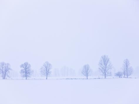 Trees Along Fence in Winter Photographic Print