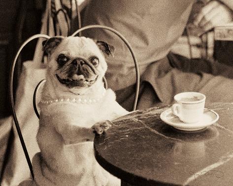 Cafe Pug Mounted Print