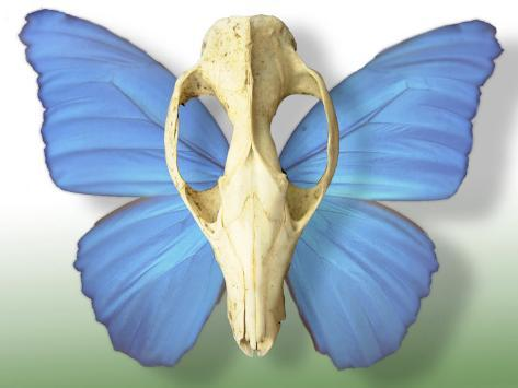 Skull with Butterfly Wings Photographic Print