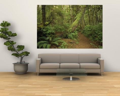 A Trail Cuts Through Ferns and Shrubs Covering the Rain Forest Floor Wall Mural