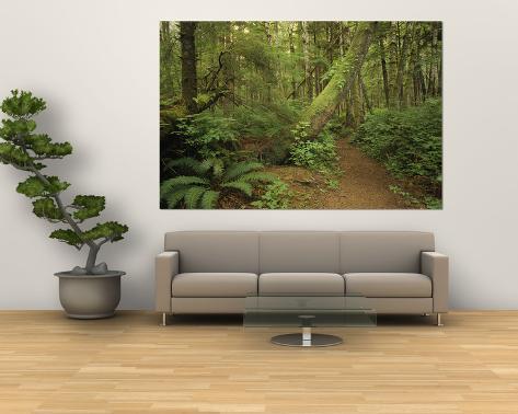 A Trail Cuts Through Ferns and Shrubs Covering the Rain Forest Floor Giant Art Print