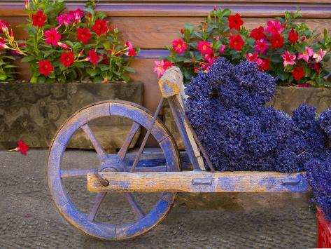 Old Wooden Cart with Fresh-Cut Lavender, Sault, Provence, France Photographic Print