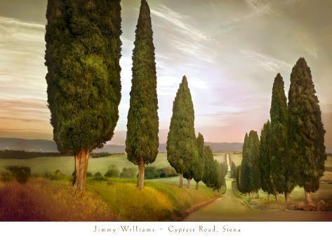 Cypress Road, Siena Art Print