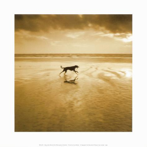 Dog on the Beach, West Wittering Art Print