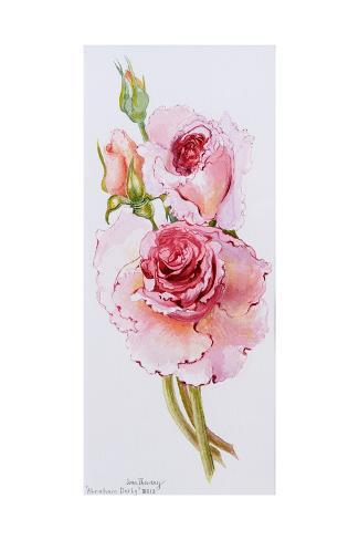 Roses (Abraham Derby), 2010 Giclee Print