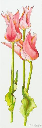 Three Red Lily-Flowered Tulips Marianne,2010 Giclee Print