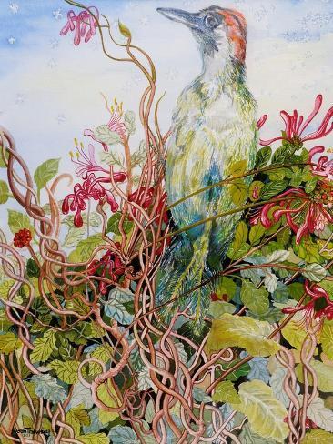 Woodpecker in the Honeysuckle, 2010 Giclee Print