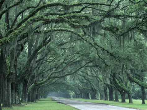 Historic Wormsloe Plantation, Savannah, Georgia, USA Photographic Print