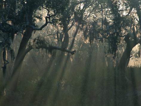 Morning Light Through Oaks in Fog, Savannah, Georgia, USA Photographic Print