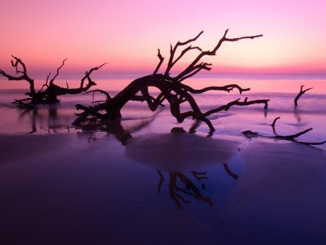 Tree Graveyard on Beach at Dusk, Jekyll Island, Georgia, USA Photographic Print