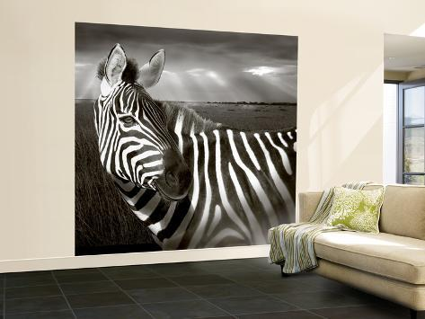 Black & White of Zebra and Plain, Kenya Wall Mural – Large