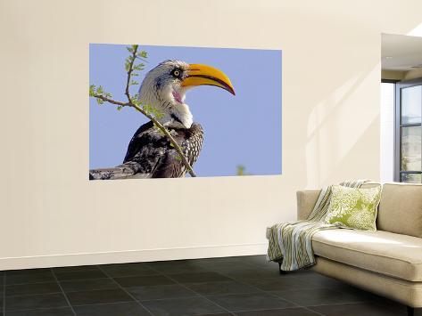 Profile of Yellow-Billed Hornbill Bird, Kenya Wall Mural