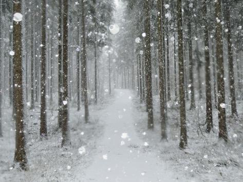 Winter Landscape, Near Villingen-Schwenningen, Black Forest, Baden-Wurttemberg, Germany, Europe Photographic Print