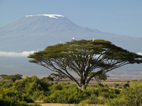 Acacia and Savanna Vegetation in Front of Mount Kilimanjaro, Kenya, Africa Photographic Print