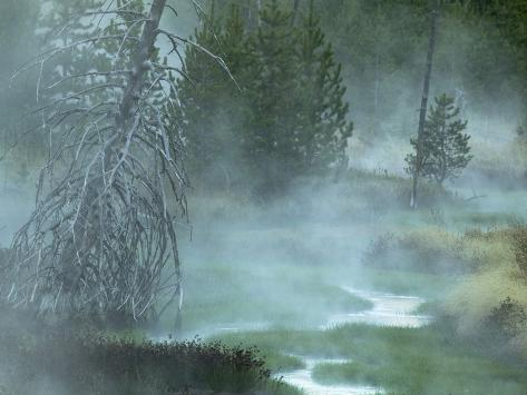 Stream and Fog in a Marshy Area in the Forest of Yellowstone National Park, Montana, USA Photographic Print
