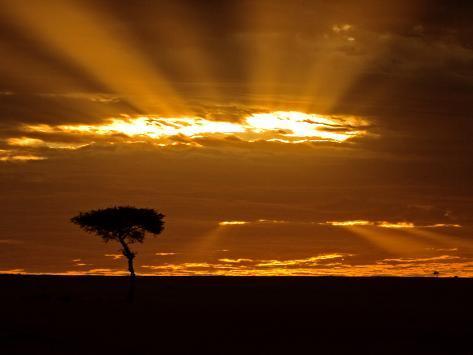 Sunrise, Maasai Mara, Kenya Photographic Print