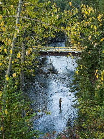 A Fisherman in Bighorn Creek, Part of the Kootenay River System Photographic Print