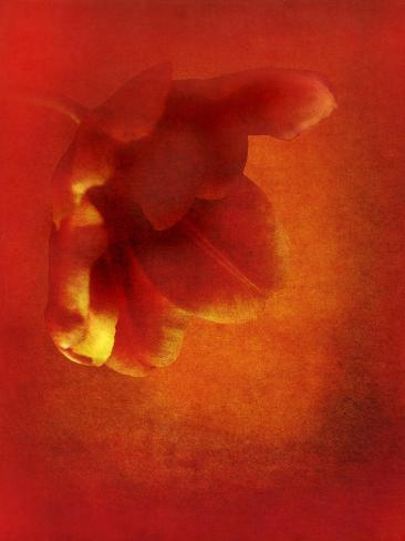 Flower in Red Giclee Print