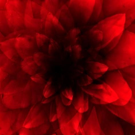 Flower Red Shade Giclee Print